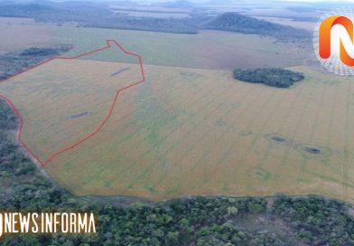 Satélites mostram 57 áreas desmatadas e multas ultrapassam 6 milhões em MS